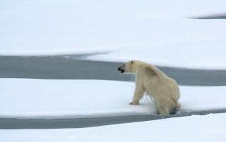 Failure Perseverance and Polar Bears